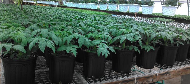 Gene 39 S Farm And Garden Center Mays Landing Nj Gene 39 S Market Plants